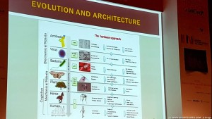Architettura dell'evoluzione organica