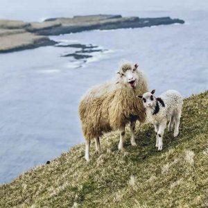 L'isola delle pecore