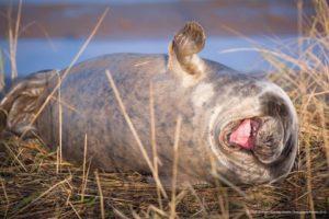 Lloyd-Durham_Comedy Wildlife Photo Awards 2019