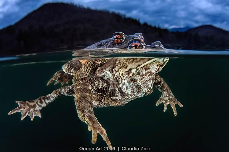 ShowTechies_2020_Fotografia subacquea concorso_Claudio_Zori