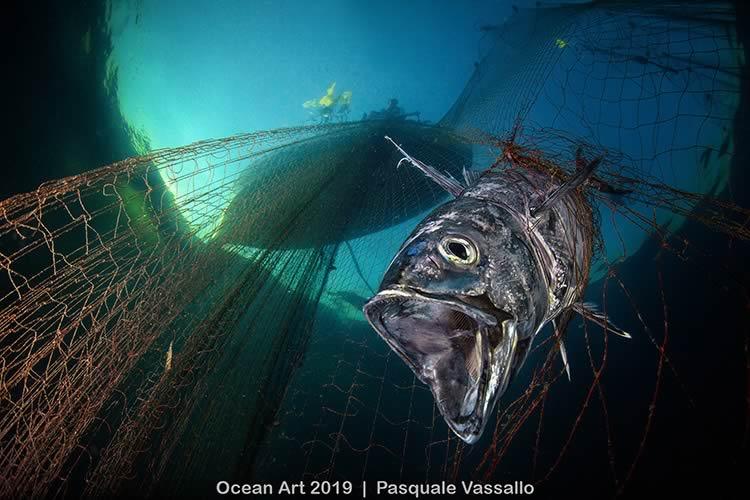ShowTechies_2020_Fotografia subacquea concorso_Pasquale Vassallo