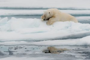 Jacques Poulard - Comedy Wildlife Photography Awards 2020