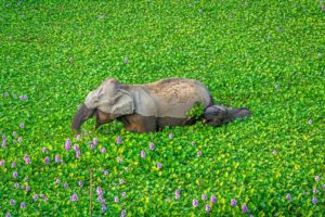 Kunal Gupta - Comedy Wildlife Photography Awards 2020