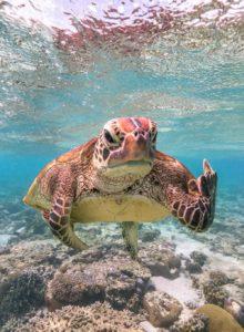 Mark-Fitzpatrick - Comedy Wildlife Photography Awards 2020