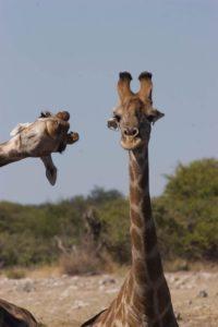 Brigitte Alcalay Marcon - Comedy Wildlife Photography Awards 2020