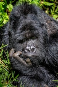 Marcus Westberg - Comedy Wildlife Photography Awards 2020