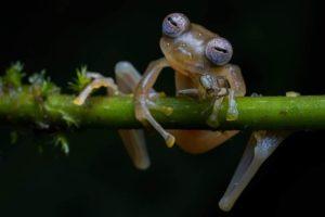 Rospo Wildlife Photographer of the Year