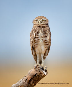 Comedy Wildlife Photography rapace