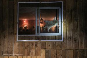 Comedy Wildlife Photography procione attaccato esternamente ad una finestra mentre tenta di aprirla