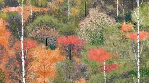 Paesaggio con alberi - Hal Lasko