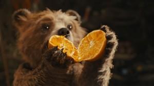 Paddington con un'arancia
