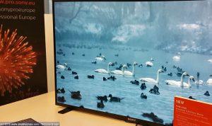 Sony monitor OLED PVM-X550