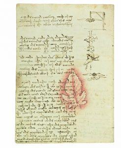 Risalita capillari foglia disegnata da Leonardo