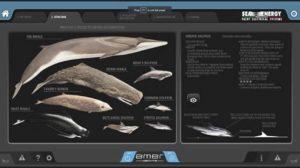 Software segnalazione cetacei su Amer 94 Twin