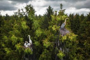 Drone Awards 2020 1°classificato Wildlife