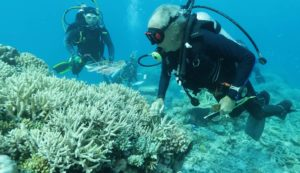 Sbiancamento coralli Great Barrier Reef Legacy