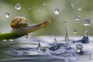 Vladimir Alekseev lumaca sotto gocce d'acqua