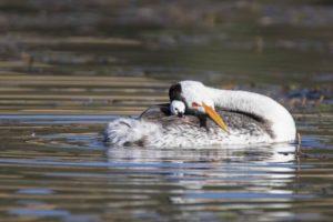 Terzo classificato abitudini uccelli World Nature Photography