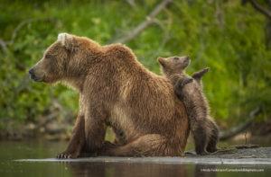Comedy Wildlife Photography mamma orso con cucciolo