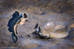 Comedy Wildlife Photography pesci a bocca aperta
