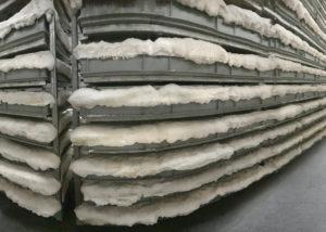 Coltura micelio in orti verticali con ambiente protetto